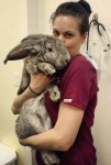 Kaninchenimpftag am 20. März